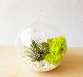B is for Birthdays and Beautiful Terrariums