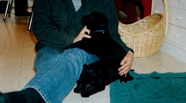 diego-puppies